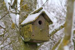 IMG_7966 (Simon M Hendry) Tags: snow lincolnshire fens tree birdbox birdhouse lichen