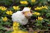 Schaf und Winterlinge (ingrid eulenfan) Tags: natur nature schaf sheep pflanzen plants figur winterlinge 90mm sonyalpha6000