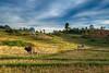 Landscape Myanmar (adriandc2010) Tags: httpswwwflickrcomphotostagsanimal httpswwwflickrcomphotostagshttpswwwflickrcomphotostagsanimal httpswwwflickrcomphotostagsfield httpswwwflickrcomphotostagstree myanmar burma shanstate