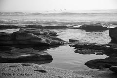 Birds, Rocks, and Waves (ChrisF_2011) Tags: florida marineland rivertosea beach scenic landscape sand coquina