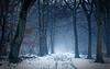 Cool tones (JonoHub) Tags: ashridge nationaltrust path winter forestpath nurseryrhyme canon5dmk3 ef100mmf28lmacroisusm