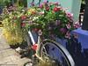 vélo-fleur© (alexandrarougeron) Tags: thailande thailand souvenir fleurs vacances ambiance paysage asie