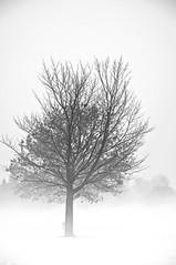 Un autre arbre de Schrödinger ?/Another Schrödinger's tree ? (bob august) Tags: 2018 2018©rpd'aoust aperture3 arbres bw blackwhite brume canada d90 février hiver mist montréal neige nikkor18135mm nikon nikond90 noiretblanc parcjarry snow trees villeray winter