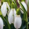 Spring Rain... (Ody on the mount) Tags: anlässe blumen blumenundpflanzen em5ii fototour grün mzuiko6028 makro nahaufnahme nahaufnahmen natur omd olympus pflanzen regentropfen schwäbischealb tropfen closeup green quadratisch raindrops