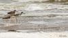 Pitotoy Chico (..Javier Parigini) Tags: nikon d800 argentina cordoba miramar laguna marchiquita miramardeansenuza nikkor 200400mm f4 flickr aves ave birds bird naturaleza nature javierparigini wildlife wildlifephotography javierpariginifotografia pitotoy chico lesser yellowlegs tringa flavipes