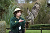 Spotted Eagle-Owl and Handler (Bri_J) Tags: tropicalbutterflyhouse northanston southyorkshire uk butterflyhouse yorkshire nikon d7200 spottedeagleowl handler eagleowl owl bird birdofprey sigma150600mm buboafricanus
