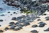 Turtle Beach (Bob Nastasi) Tags: turtles beach maui ocean bobnastasi d800e