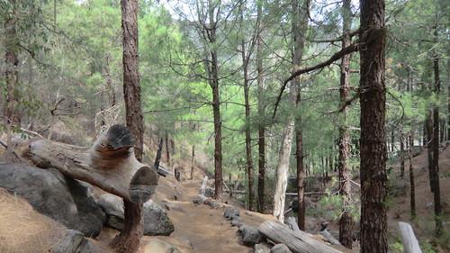 La Gomera (Spain's Canary Islands) -  Trail from La Laja to Roque Agando