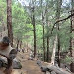 La Gomera (Spain's Canary Islands) -  Trail from La Laja to Roque Agando thumbnail