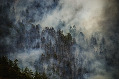 Forest Fire (Binoy Bhushan) Tags: fog smoke forestfire fire shade tree