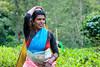 Happy International Women's Day ! (kumherath) Tags: canon5dmark3 sigma70200 internationalwomensday teaplucker teaestate tea