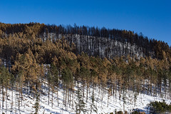 Custer Park 20180223-0019 (Photos By Bob Van) Tags: blackhills csp custerstatepark landscape snow southdakota winter custer unitedstates us