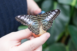 Papillons en fête, Québec, Canada - 5050