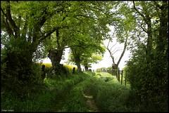 Château du Loir (Sarthe) (gondardphilippe) Tags: châteauduloir sarthe maine paysdelaloire chemin randonnée paysage landscape vert green zen arbre tree