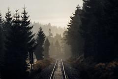 Morning glow (Gruenewiese86) Tags: 7d brocken harz instameet forest wald waldlandschaft travel morning sun sunlight harzer harzlandschaft