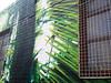 fern mural (AS500) Tags: marrickville innerwest fern mural green art streetart batch brewing brewery