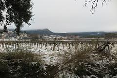 Nevadeta del 28 de febrer (esta_ahi) Tags: neu nieve snow nevada vinya viña vineyard viñedo vitisvinifera paisaje landscape laberna torrellesdefoix penedès barcelona spain españa испания