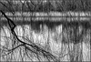 Arrow Valley Lake, Redditch, 9 March 2018 (alanhitchcock49) Tags: redditch worcestershire arrow valley lake park black and white mono textures structure