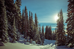 Snow and the Sun (ValeTer_) Tags: nikond7500 mtrainiernationalpark nationalpark usa wa washingtonstate rainier snow winter