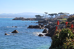 IMG_7597 (mudsharkalex) Tags: california pacificgrove pacificgroveca