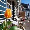 Tulip (✦ Erdinc Ulas Photography ✦) Tags: tulip tulp flower traditional culture netherlands nederland dutch marken holland yellow orange green panasonic table chair smooth background focus red travel bloem bokeh