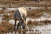 Cavall (Adrià Cabo) Tags: emporda aiguamolls caballo horse