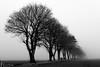 Receeding Trees (Barry Carr) Tags: landscape minimalism blackandwhite monochrome mist angus montrose fuji mono fujinon35mmf2 bw fujixt20 xf35mmf2rwr fuji35mmf2
