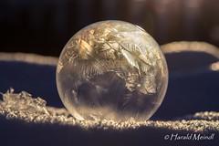 frozen bubble (harald_meindl) Tags: canoneos6d canon macro makro seifenblase frozen bubble frost eiskristall eis schnee snow colore