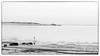 Eider`s Flight (Eline Lyng) Tags: water isle coast coastline seascape nature landscape animal bird birds eider larkollen sletter norway winter snow sunset bw blackandwhite monochrome monochrom dof mediumformat flight leica s 007 leicas summarits70mm 70mm leicalens throughherlens