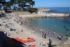 IMG_7658 (mudsharkalex) Tags: california pacificgrove pacificgroveca loverspointpark loverspointbeach beach