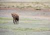 (SkinnyOrangeCat) Tags: africa eastafrica tanzania hyena area ngorongoroconservationarea