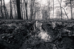 muddy forest (bjdewagenaar) Tags: photography photograph photographer sony sonyalpha sonyphotographer sonyimages sonya77ii sigma wideangle ultrawideangle nature forest trees water reflection blackandwhite blackwhite bw mono monochrome monoart dutch holland raw lightroom
