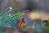 🌞💧 (S. Kemkes) Tags: natur blatt tropfen sonnen farben colors rain sun gras grün green orange light licht bokhe