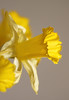 Floral Power (AnyMotion) Tags: daffodil narzisse osterglocke narcissus floral flowers blossom blüte plant pflanze bokeh spring frühling primavera printemps 2016 macro makro frankfurt plants anymotion vase colours colors farben yellow gelb 7d2 canoneos7dmarkii npc