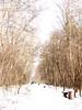 winter (Darek Drapala) Tags: winter forest white panasonic poland polska panasonicg5 cold lumix light nature olszynka trees path