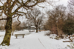 Snow in March (PhredKH) Tags: canonphotography connaughtwater fredkh photosbyphredkh phredkh splendid essex snow whitesnow trees sky pathway park parkland urbanparks forest eppingforest outdoorphotography outdoor outdoors canoneos5dmarkiii ef2470mmf4lisusm 2470mm tree road canoneos5dmkiii