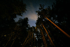 Be More Like Trees (John Westrock) Tags: trees night nature sky stars forest porttownsend washingtonstate pacificnorthwest canoneos5dmarkiii samyang14mmf28ifedmcaspherical longexposure