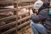 Photowalk mit den Jungs (O.I.S.) Tags: photowalk kids kinder jungs boys tim schweine pigs bauernhof farm winter foto fotograf photography canon 5d mkii 70200 f4 l is usm vlog