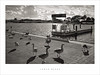 Lunch break (Parallax Corporation) Tags: blackwhite sonya7rii sonyfe35mm southportmarina geese birds marinabridge float sunlight clouds