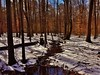 Snow In The Forest (matthewbeziat) Tags: patuxentresearchrefuge patuxentresearchrefugenorthtract winterscenes annearundelcounty marylandforests forests maryland
