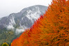 Mt. Si in the Fall (s.d.sea) Tags: fall autumn colorful pentax k5iis outdoors outside outdoor pnw pacificnorthwest washington washingtonstate nature leaves leaf foliage orange red seattle eastside north bend snoqualmie