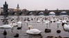Prague-5904 (bella_blue_star) Tags: prague czechrepublic swans vltava charles bridge