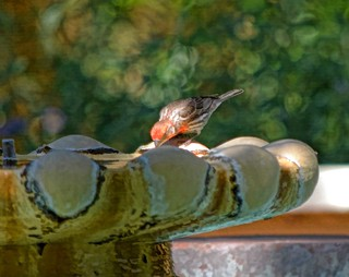 FAITH IS THE BIRD THAT FEELS THE LIGHT WHEN THE DAWN IS STILL DARK.