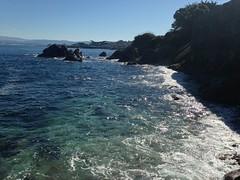 IMG_2288 (mudsharkalex) Tags: california pacificgrove pacificgroveca