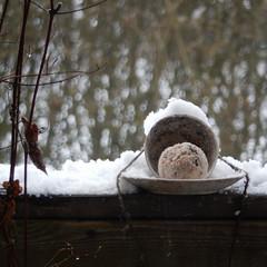 and so a new winter wonderland arrived (Landanna) Tags: winterwonderland winter snow sneeuw sne birdfeeding