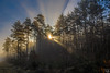 the sun come´s out (schda22) Tags: sun sonne fog nebel wald wood early morgen dust dunst