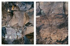 Punta de Teno (miemo) Tags: canaryislands islascanarias puntadeteno tenerife abstract closeup diptych em5mkii europe olympus olympus40150mmf456 omd rock spain stone texture travel winter