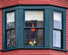 A snapshot of a parallel universe (James_D_Images) Tags: bay window victorian building wood green frame siding red cut flowers tulips colourful vase orange lamp curtains pink yellow
