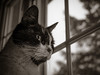 Panasonic gx80 30mm olympus macro (Jasrmcf) Tags: panasonic panasonic1232mm panasonicgx85 panasonicgx80 gx80 gx85 macro olympusmacro30mm dof bokeh bokehlicious bokehgraph 30mm smooth blur animal cats cat eyes blackandwhite beautiful nature ngc dreamy neko gato chat kat katze
