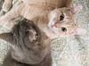 Two Cats Lying Together (scattered1) Tags: cat hannah stuart close cuddle cute face feline head kitten pet twocats